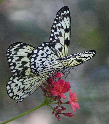 Foto eines Schmetterlings